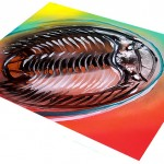 TriloBITE ME  Modern Abstract Fish Art Artwork Paintings J Vincent Scarpace
